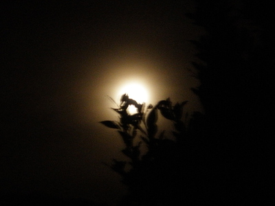 081013_moonb.jpg
