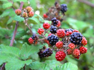 061012berries1.jpg